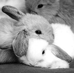 bunnies at peace