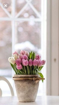 Potted Plants, Indoor Plants, Pink Tulips, Rose Cottage, Terracotta Pots, Simple Pleasures, Lovely Things, Shrubs, Cottages