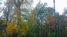 Autumn colours in Fitzroy garden, Melbourne Autumn Colours, Melbourne, Mountains, Garden, Nature, Plants, Travel, Color, Male Celebrities