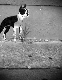 COOLIDGE Dog - Houston Graffiti : http://www.flickr.com/photos/iseenit/5041623078/in/set-72157604184553355