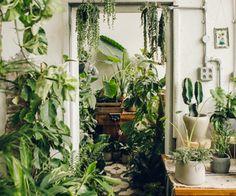 Living jungle
