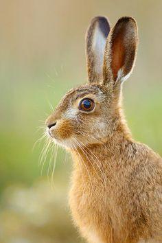 "beautiful-wildlife: ""Happy Easter by Simon Litten """