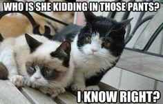 Grumpy Cat and Pokey don't like thosepants.