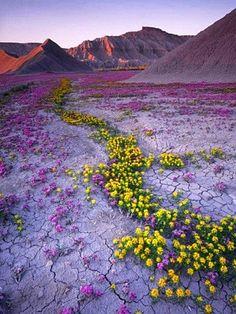 yellowbee plants