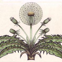 dandelion tile - Google Search