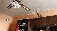 Este gatito que no pensó al brincar del techo al ventilador.   28 Que están teniendo un día peor que el tuyo