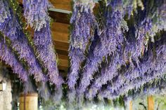 lavender roof