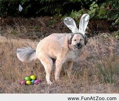 Funny Easter dog - Funny Picture - This is so not right, but funny! Funny Easter Pictures, Funny Animal Pictures, Dog Pictures, Funny Animals, Cute Animals, Crazy Animals, Animal Fun, Happy Animals, Animal Memes