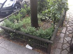 Sehr ordentlich eingezäunt Urban Gardening, Sidewalk, Street, City, Plants, Ice Cream Parlor, Lawn And Garden, Flora, Apartment Gardening