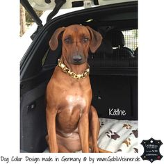 Hundehalsband Goldstück für große Hunde