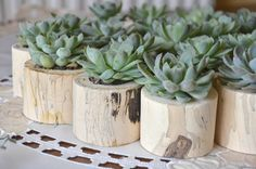 succulents in spalted ivy pots