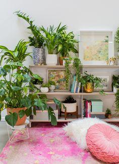 plant styling - Oh Joy! Indoor Trees, Indoor Plants, Indoor Gardening, Interior Design Inspiration, Color Inspiration, Little Gardens, Unique Plants, Plant Shelves, Hanging Plants