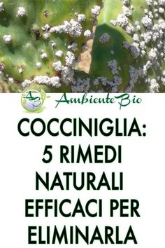 Cochineal: 5 natural remedies to get rid of it , Card Tricks, Photosynthesis, Plant Species, Garden Care, Begonia, New Things To Learn, Flowers Nature, Healthy Mind, Fruit Trees