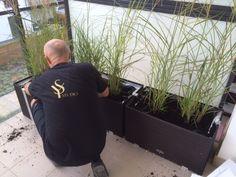 Ogród w nowoczesnym stylu, fachowcy YS studio sadzą trawy ozdobne, które będą cieszyć oko przez cały rok, szczególnie w zimę.