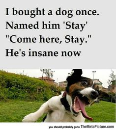 Funny and Hilarious