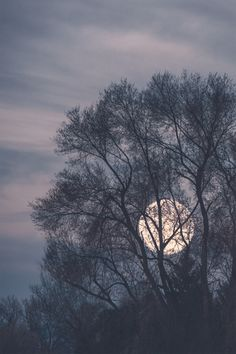 The moon behind winter trees