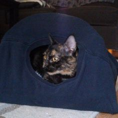DIY Cat Tent: 9 Steps (with Pictures) Diy Cat Tent, Car Tent, Cat House Diy, Cat Room, Diy Home Crafts, Dog Cat, Dogs, Pictures, Animals