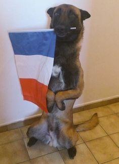 Hier matin, lors de l'assaut donné par les forces de l'orde à Saint-Denis, un chien policier a été abattu par des terroristes. Diesel, une femelle Malinois âgée de 7 ans, était un chien d'exception. Elle avait été formée spécialement pour ...