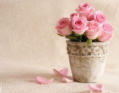 玫瑰花与花瓣背景