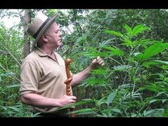 Rick Simpson is not your everyday man. This brilliant mind managed to heal over 5,000 people suffering from cancer. Only by using what everyone else consider harmful- marijuana. As we all know, and as