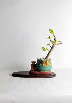 "Jade bonsai tree (office buddy) ""Winter Jade Collection"" by LiveBonsaiTree by LiveBonsaiTree on Etsy"