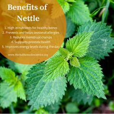 Stinging nettle is a nutritious plant that gives us both food and medicine. It is a versatile herb that is commonly used for chronic health issues such as arthritis and type 2 diabetes, while also being used for acute care to relieve seasonal allergy symptoms. It is especially loved for being a powerhouse of nutrients - one of the highest in the plant world.