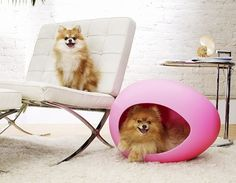 I love the chair and I'd take that pEi Pod for my dog anytime.
