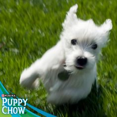 Puppy action shot! Purina® Puppy Chow®