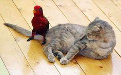 Que fais tu là,  petit oiseau?