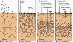 Weathering and Soil | Geology IN How soil is formed.     ......By far our most important mineral resources are found in the form often denigrated as dirt.
