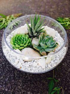 Low Bowl Terrarium-minimalist Auckland, Terrarium, Succulents, Minimalist, Plants, Terrariums, Succulent Plants, Flora, Plant