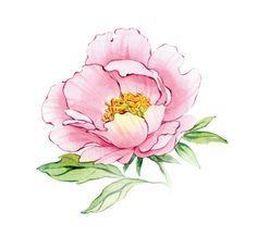 watercolor peony patterns by Natalia Tyulkina, via Behance