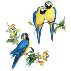 TSHIRT   Blue & Gold  Macaw Parrot Exotic by AlwaysInStitchesCo, $13.00