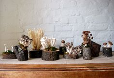 first airplants- now fungi?  a possibility.