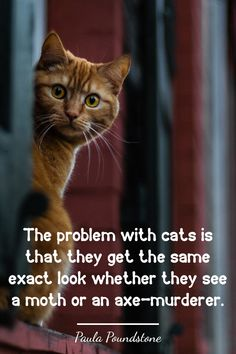 The problem with cats is that they get the same exact look whether they see a moth or an axe-murderer.  #catquotes #catquote #cat #cats #catlover #catlovers #catlove #catlife #catloversclub #catslover #crueltyfreeblogusa Paula Poundstone, Cat Love Quotes, Owning A Cat, Cat Life, Axe, Cruelty Free, Moth, Cat Lovers
