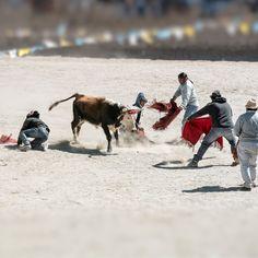 """El Toreo de la Vincha uma """"tourada sem sangue"""" que acontece todo dia 15 de agosto na pequena vila de #Casabindo à 3.300 metros acima do nível do mar e 55 km de #AbraPampa no departamento de #Cochinoca Aqui os toureiros precisam ter habilidade para se desviar dos chifres do touro e tirar uma fita vermelha com moedas de prata para oferecer a #VirgenDeLaAsunción - - - - - - - @visitargentina @turismojujuy #Argentina #ArgentinaEsTuMundo #argentina #argentina_ig #argentina360 #argentinaig…"""