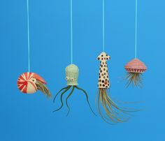 Miniature Hanging  Air Planter Collection, Live Ornament, Nautilus, Jellyfish, Squid, Octopus,Whimsical Gift by CindySearles on Etsy https://www.etsy.com/listing/242219322/miniature-hanging-air-planter-collection