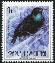 Papua New Guinea: Ptiloris magnificus, Magnificent riflebird - (Riflebird magnífico) 1993