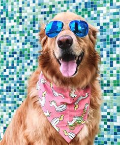 Personalized Dog Bandana, Pet Scarf with Swan Floaties, Dog Neckerchief with Swan Pool Float, Perfect Gift for Summer Hostest Cute Puppies, Cute Dogs, Dogs And Puppies, Dog With Glasses, Dog Wallpaper, Puppies Wallpaper, Summer Dog, Dog Photography, Concept Photography