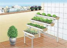 mini-horta: Fotos de mini-horta