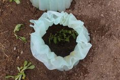 April Planting Guide 1