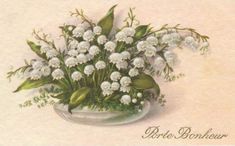 """From the time I was a child until I left for the USA I would received some Lily of the Valley on the of May. My father would give """" u."""