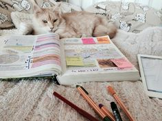 study, book, and cat image
