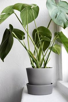 Terracotta planters are a thing of the past. Reinvent IKEA'sIngefaraplanter with a fresh coat of paint. Get thehow-to. DOMINO:16 IKEA Hacks That Deserve A Spot In Your Home