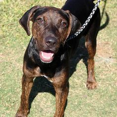 Tex - SPCA of Texas (McKinney)