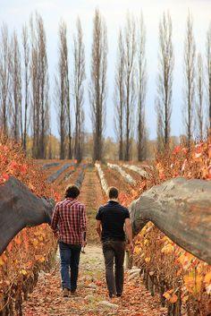 autumn in the vineyard, Finca Piedra Infinita, Altamira, Mendoza, Argentina