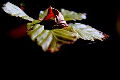 Red&Green by Mauro Granato on 500px