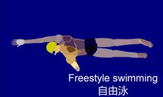 Freestyle swimming1Freestyle Swimming Más