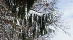 Mein neuer Film Winterlandschaft 2012