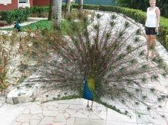Zoetry Paraiso de la Bonita: Our morning friend